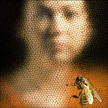 vederea și ochii albinelor)